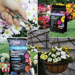 Polyanthus Success Kit