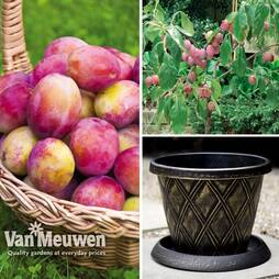 Plum Victoria Patio Collection