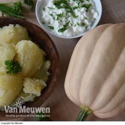 Squash 'Baked Potatoes' (Winter)