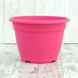 Coloured Planters