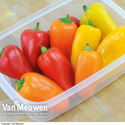 Sweet Pepper Snack Peppers