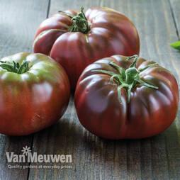 Tomato 'Black Russian'