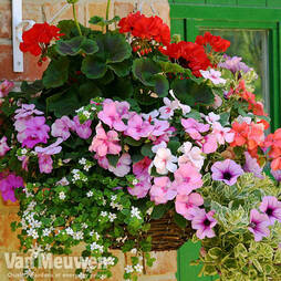 Hanging Basket SAVER Collection