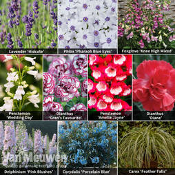 Perfect Perennial Collection