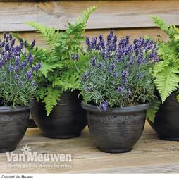 Wenlock Planters