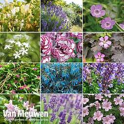 Nurseryman's Choice Cottage Garden Perennial Collection