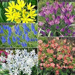 300 Spring Flowering Bulbs