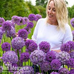 Allium Cut Flower Collection