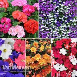 Summer Bedding Mix