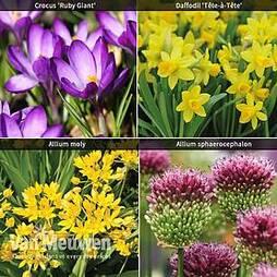 Spring Flowering Bulb Bonanza Collection