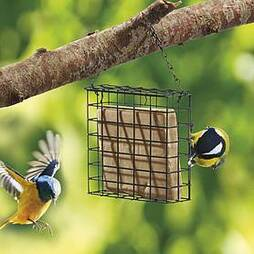 Nature?s Market Suet Cake Bird Feeder