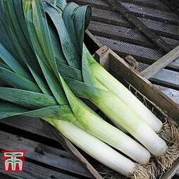 Leek 'Below-Zero' F1 Hybrid