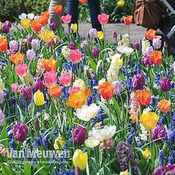 Nurserymans Choice Bulb Mix