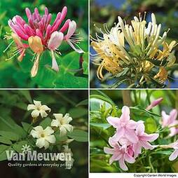 Nurseryman's Choice Climber Collection