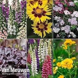 Bumper Potted Perennial Collection