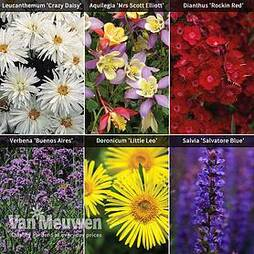 Best Perennial Collection