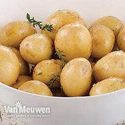 Potato 'Maris Peer'