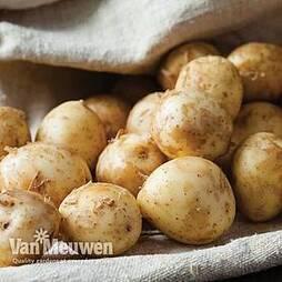 Potato 'Lady Christl'