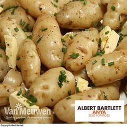 Potato 'Anya'
