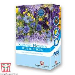 Summer Flowers Theme Blue Scatter Pack