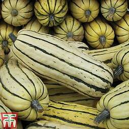 Squash 'Honeyboat' (Winter)