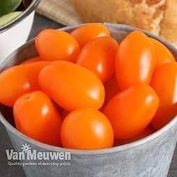 Tomato 'Mirado Orange' (grafted)