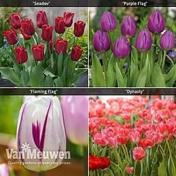 Tulip Patio Collection