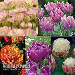 Tulip Bumper Collection