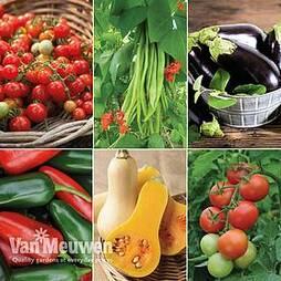 Nurseryman's Choice Vegetable Collection