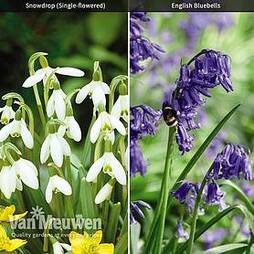 Woodland Garden Bulb Duo