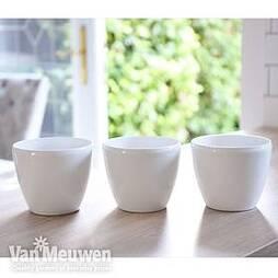 White Plastic Pot