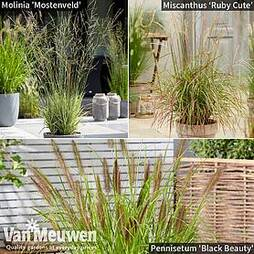 Architectural Grasses Collection