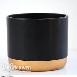 Two-tone ceramic pots - Black/Gold