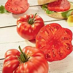 Tomato 'Buffalosteak' F1 Hybrid