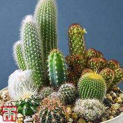 Cactus Mix (House Plant Seeds)
