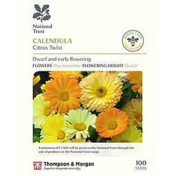Calendula 'Citrus Twist' (National Trust)