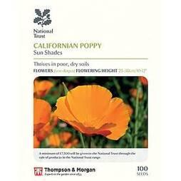 Californian Poppy 'Sun Shades' (National Trust)