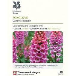 Foxglove 'Candy Mountain' (National Trust)