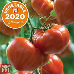 Tomato 'Gourmandia' F1 Hybrid