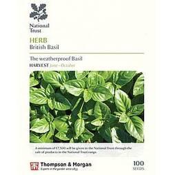 Basil 'British Basil' (National Trust)