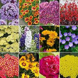 Perennial Summer Colour Collection