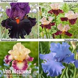 Iris Premium Collection