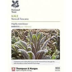 Kale 'Nero di Toscana' (National Trust)
