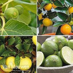 Mediterranean Fruit Collection