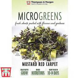 Microgreens Mustard 'Red Carpet'