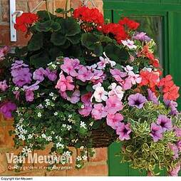 Nurseryman's Choice Hanging Basket Plants