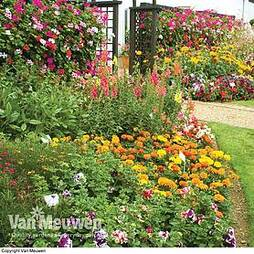 Nurseryman's Choice Summer Plants