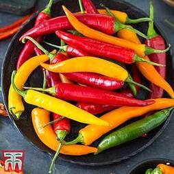 Chilli Pepper 'Heatwave' (Hot)