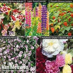 Perennial Saver Collection