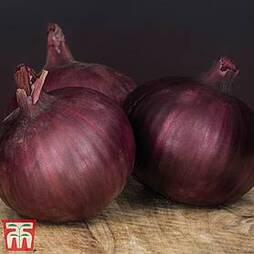Onion 'Redlander'